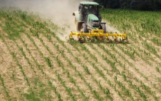 kukorica sorközművelés Gödre