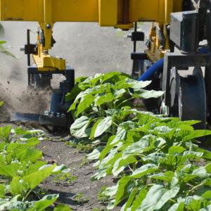 sorközművelő kultivátor forgókapás művelőelem készlet